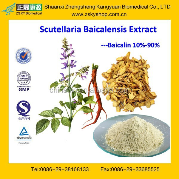 GMP Factory Supply Natural Radix Scutellaria Extract