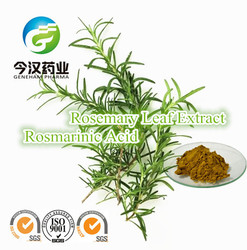Natural food preservative rosemary extract rosmarinic acid