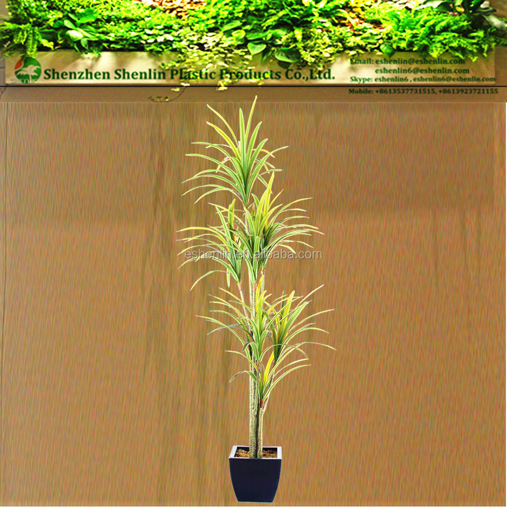 Yucca Flower Wholesale, Flowers Suppliers - Alibaba