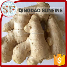 Low price fresh peeled ginger supplier