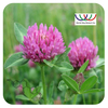 Free Sample Hot Sale 100% Natural Plants Estrogen Red Clover Trifolium Pratense L. Extract with 2.5% Isoflavones