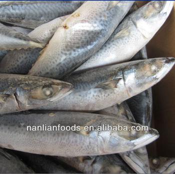 Bqf frozen fish seafood buy frozen fish seafood marine for Best frozen fish