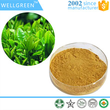 Wellgreen OEM service China famous green sweet tea extract
