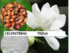 natural organic Cape Jasmine Fruit P.E.10%-99% gardenia extract