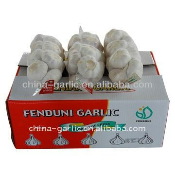 Fresh Garlic 2016 For Sale 5.0cm, Approved by GLOBAL G.A.P