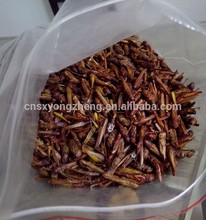 Best price of plastic grasshoppers