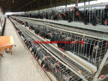 No Rust Battery Chicken Cage