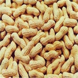 Supply Roasted Peanut in shell with good Quality