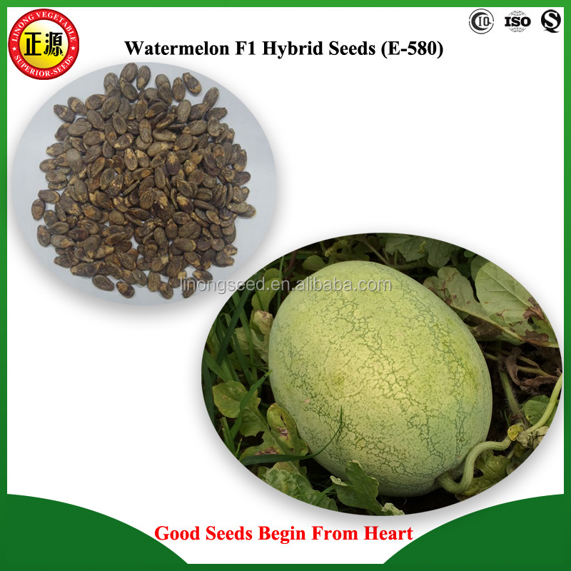 High quality and high yield the King F1 hybrid watermelon seed