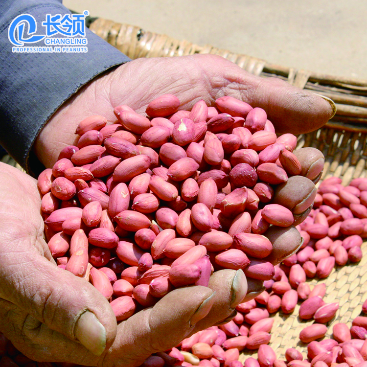 top quality peanuts for peanut oil