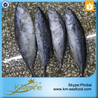 Sea Food Frozen Bonito Tuna On Sale