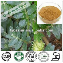 Natural GMP hot sale tribulus terrestris extract powder 60 saponins
