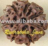 Seven-Faced Rudraksha Java Bead