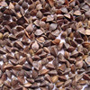 Ukraine buckwheat husks
