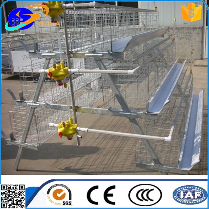 chicken farm used layer chicken cage with automatic water system from China supplier