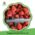 Wholesale Frozen Fruits Iqf Frozen Strawberry
