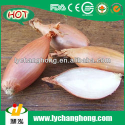 Sell Chinese Fresh Shallot