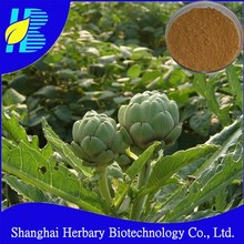 Natural Herbal Globe Artichoke Extract/CAS.NO.:30964-13-7