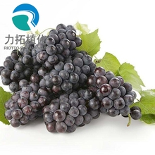 Fruit Flavor grape juice powder