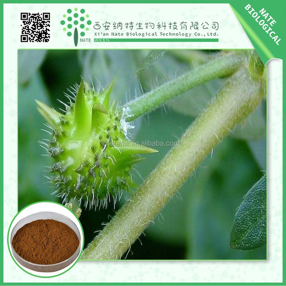 Care exporter health herbal product - 100 Natural Health Care Product Organic Tribulus Extract Tribulus Terrestris Powder Diosgenin Tribulus Saponin