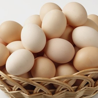 organic egg prices export from in france