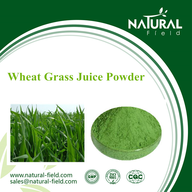 Good reliable supplier nutritional ingredient wheat grass juice green powder