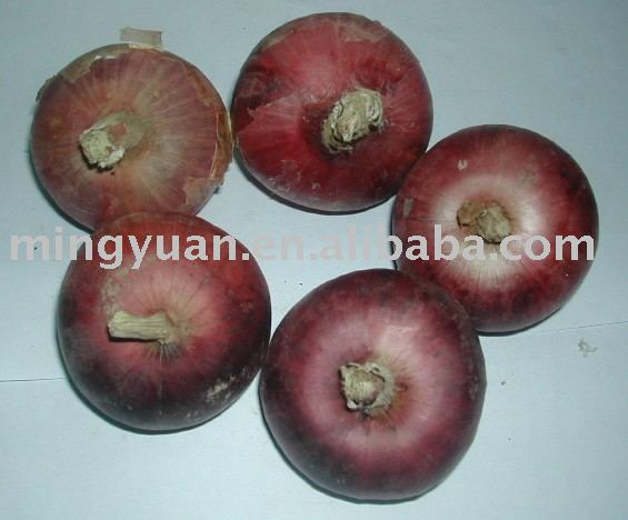 fresh red onion size 8cm up