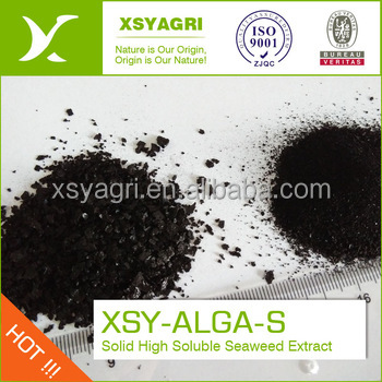 High quality Seaweed Extract green organic fertilizer extracted from marine seaweed for improving soil condition
