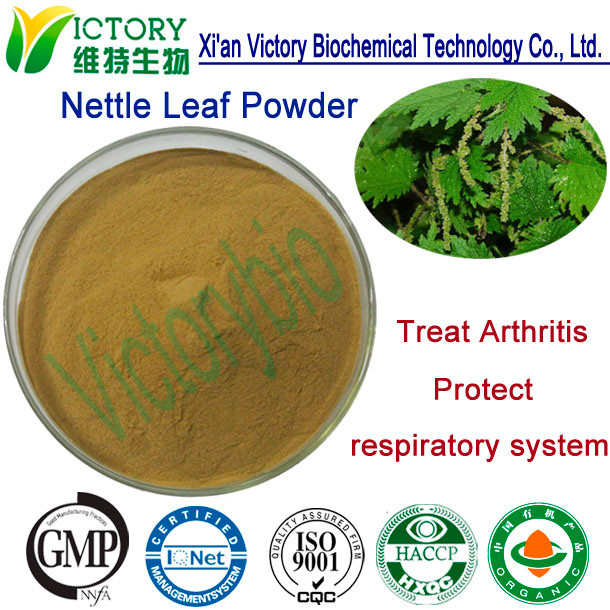 GMP approved manufacturer supply Organic Nettle/Urtica dioica L. extract