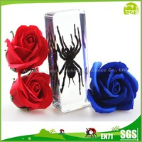 Tarantula Spider Resin Specimen for Souvenirs