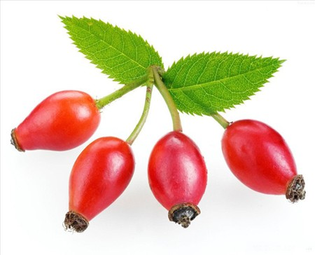 HACCP certified Origin brands supply organic rosehip oil in india