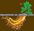 Hign Quality Traditional Bluk Dried Herbs Wild Ginseng Root Extract