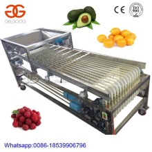 Vegetable sorting machine/onion sorting machine/olive sorting machine for sale
