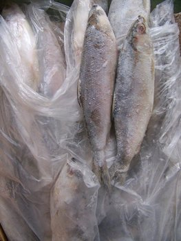 Frozen Milk Fish