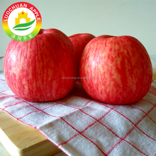 LUOCHUAN apples best red delicious fuji apples for baking
