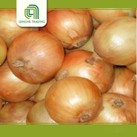 onion factory price made in China