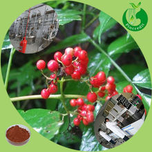 High quality elderberry extract elderberry extract anthocyanins
