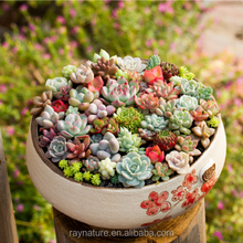 Decorative real touch fake plastic artificial succulent plants