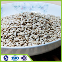 Wholesale and bulk peeled sunflower seeds kernels