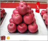 wholesale fresh fruit green apple prices in Yantai