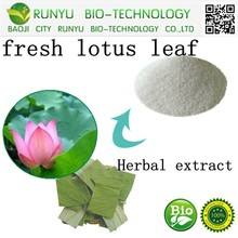 Herbal extract Nuciferin powder type from fresh lotus leaf