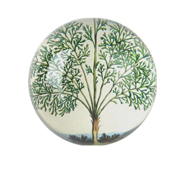 optical domed crystal paperweight,clear crystal with tree