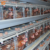 Automatic Battery Cages For Laying Hens Battery Chicken Farm
