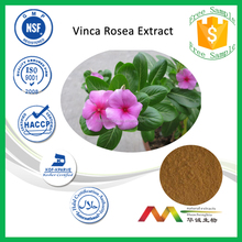 NSF-GMP Natural Herbal Extract Periwinkle Extract/Catharanthus Roseus Extract