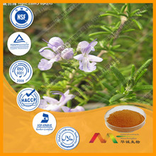 Manufacturer sppply rosemary herb extract powder