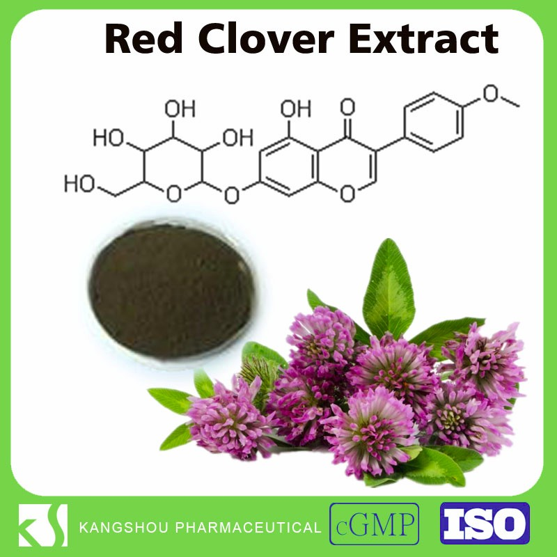 High quality red clover extract powder Trifolium pretense extract flavone 2.5% Red clover extract