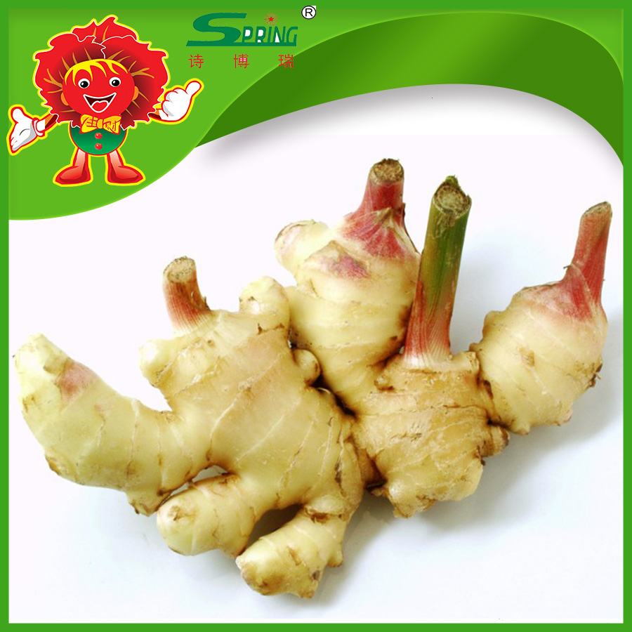 Spicy mature ginger for sale