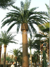 artificial outdoor palm trees,artificial plant,Artificial palm Tree,