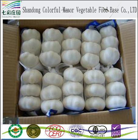 Hot sale China new crop bulk fresh white natural garlic