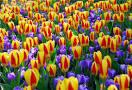 flower bulbs all sizes indoor/outdoor